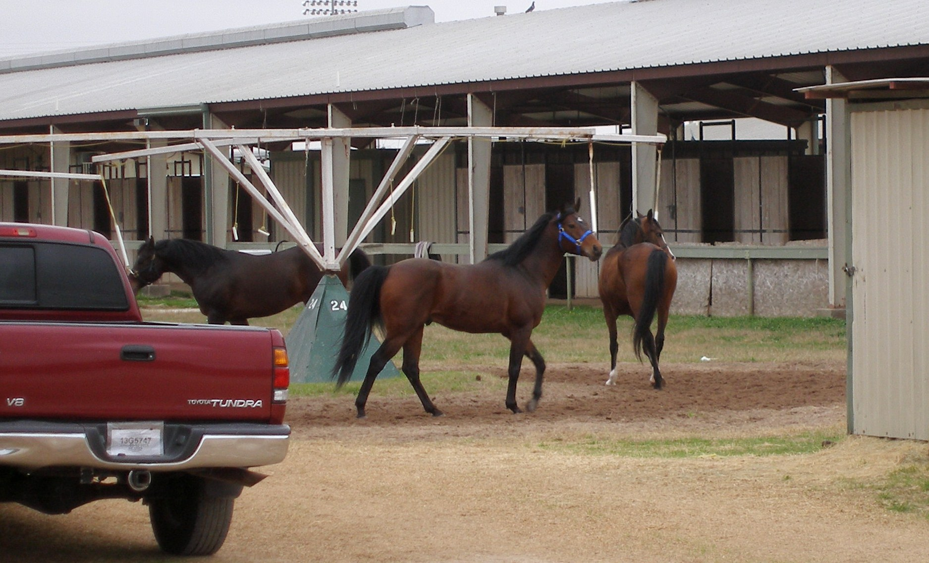 Horse Racing Stable Tours